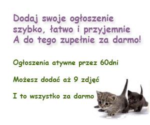 twojepupile.pl ogłoszenia za darmo