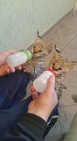 Dostępne są koty Serval i Savannah oraz caracal i ocelot